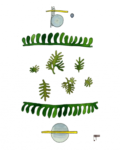 Fern Geometry: Light Blue Scatter