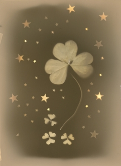 Clover Dreams & Stars