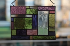 Stained Glass Phlox Enverre
