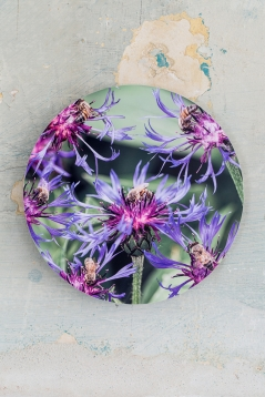 Spotted Knapweed Flower Medallion