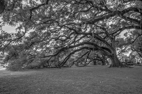 City Park Oaks BW