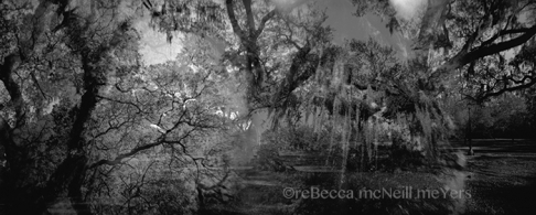 Spanish Moss and Oak Veins