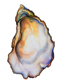 Blushing Oyster Original Painting
