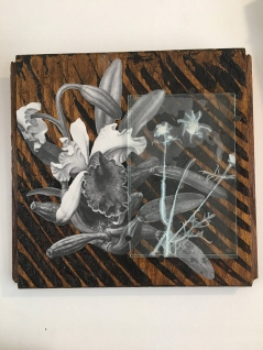 Mixed Media Collage with Cosmo Flower
