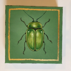 Jewel Beetle 1