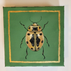 Jewel Beetle 4