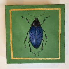 Jewel Beetle 6