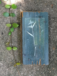 Spiderwort Enverre on Reclaimed Wood