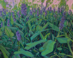 Pickerel Weed Study