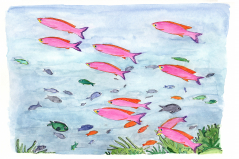 School of Neon Pink Fish