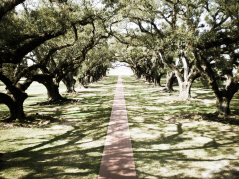 Photographs: Oak Alley
