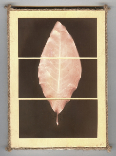 Pieces of Nature, Magnolia Leaf