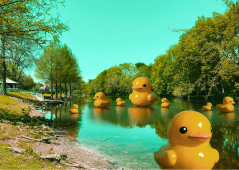 Rubber Duck Pond