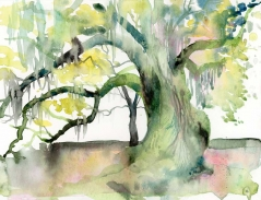 Tree of Life - Audubon Park - watercolor painting