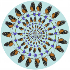 Hecale Longwing Butterfly Circles / Main Image