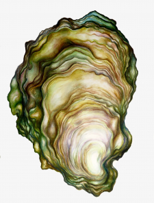 Oyster I Hardly Knew Her Archival Print / Main Image
