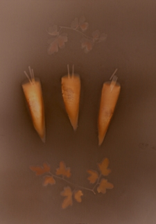 Three Carrots & Wayward Stalk / Main Image
