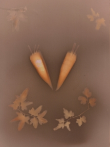 Two Carrots & Vine / Main Image