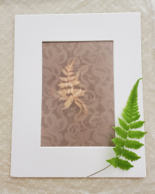 Fern: Magic & Fascination